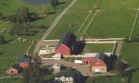 Springdale Farm Opens